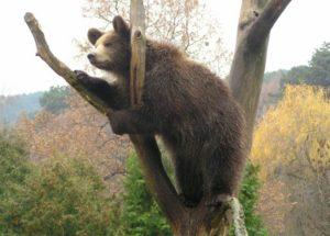 zoo_bojnice_-_medved